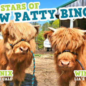 Cow Patty Bingo Stars
